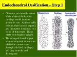 endochondral ossification step 1