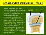 endochondral ossification step 5