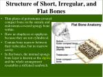 structure of short irregular and flat bones