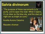 salvia d ivinorum34