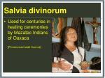 salvia d ivinorum35