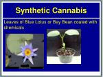 synthetic cannabis25