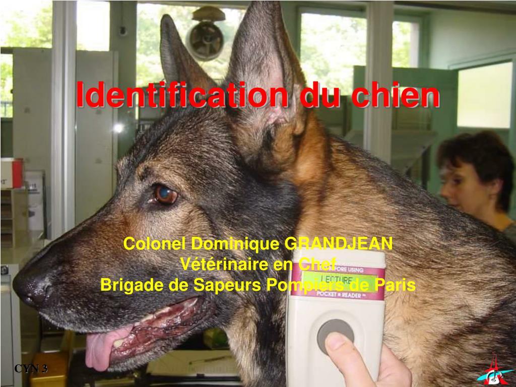 identification du chien l.