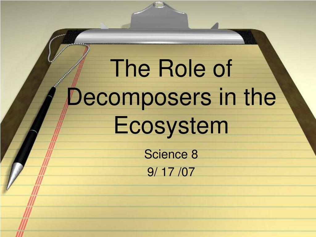 the role of decomposers in the ecosystem l.