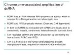chromosome associated amplification of dsrna24