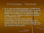 enzimologia tiaminase