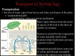 transport of xylem sap