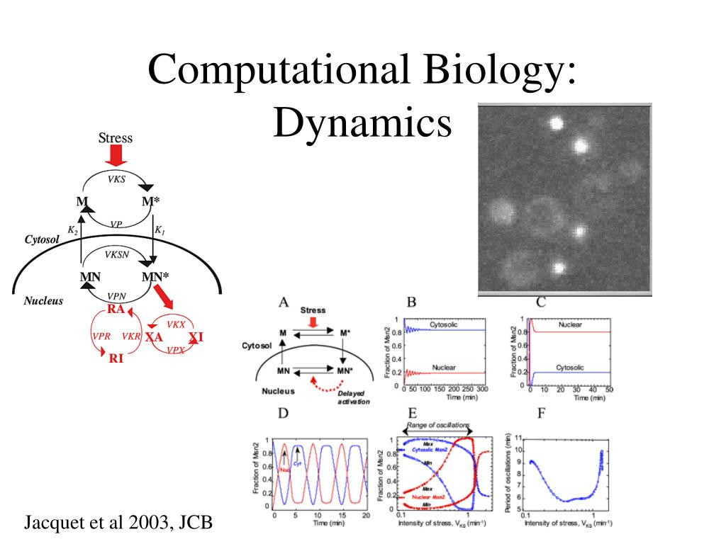 Computational Biology: Dynamics