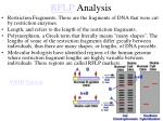 rflp analysis