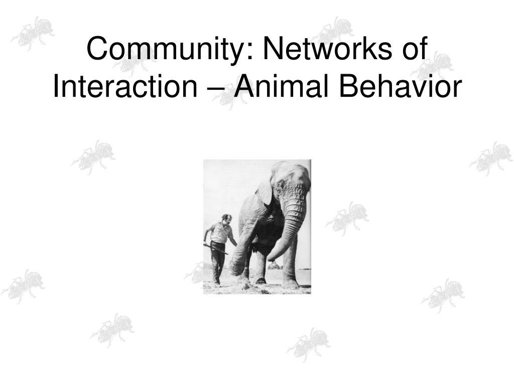 Community: Networks of Interaction – Animal Behavior