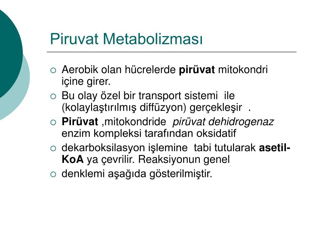piruvat metabolizmas l.