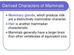 derived characters of mammals