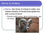 horns antlers