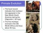 primate evolution42