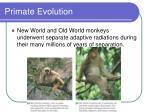 primate evolution43