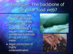 ice algae the backbone of the polar food web