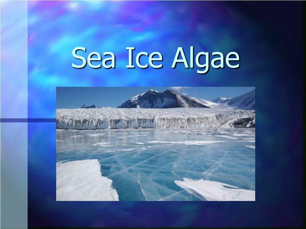 sea ice algae l.