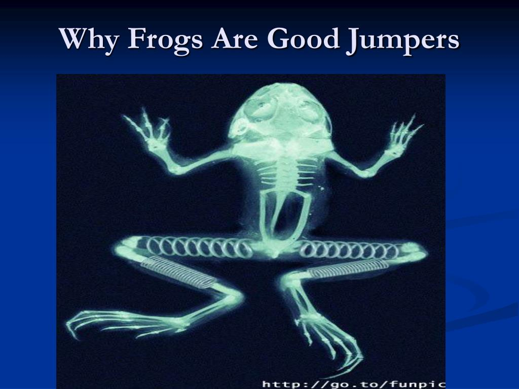 Why Frogs Are Good Jumpers
