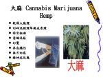 cannabis marijuana hemp