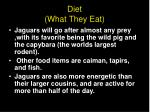 diet what they eat