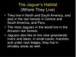 the jaguar s habitat where they live