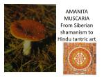 amanita muscaria from siberian shamanism to hindu tantric art