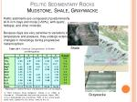 pelitic sedimentary rocks mudstone shale graywacke