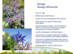 borage borago officianalis