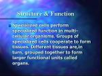structure function4