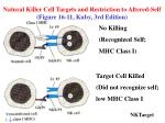 natural killer cell targets and restriction to altered self figure 16 11 kuby 3rd edition