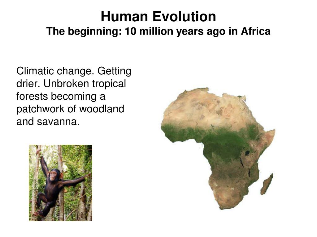 human evolution the beginning 10 million years ago in africa l.