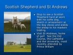 scottish shepherd and st andrews
