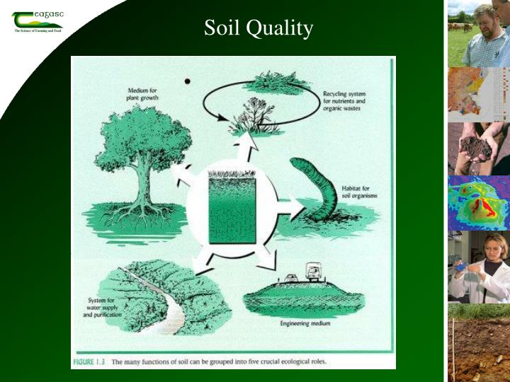 Ppt soil biological indicators organic farming systems for Soil quality indicators