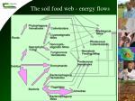 the soil food web energy flows