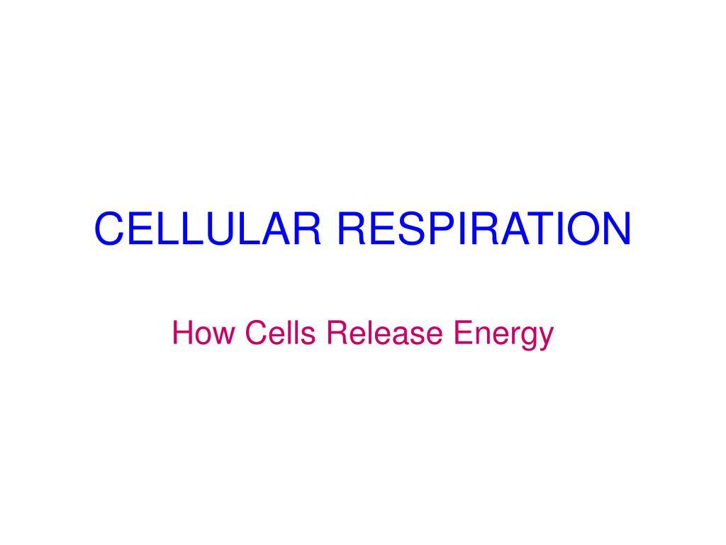 cellular respiration l.