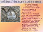 kangaroo rats and the loop of henle