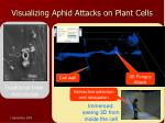 visualizing aphid attacks on plant cells