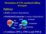mechanism of ctl mediated killing of targets