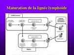 maturation de la lign e lympho de