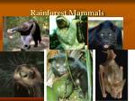rainforest mammals