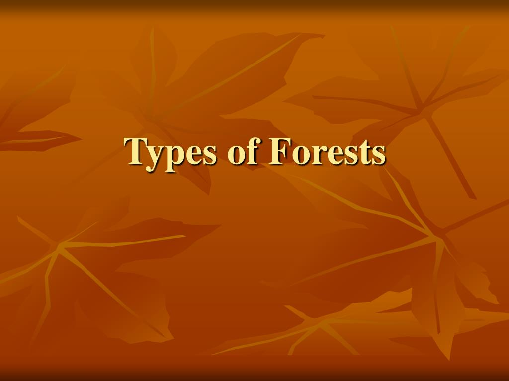 types of forests l.