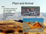 plant and animal