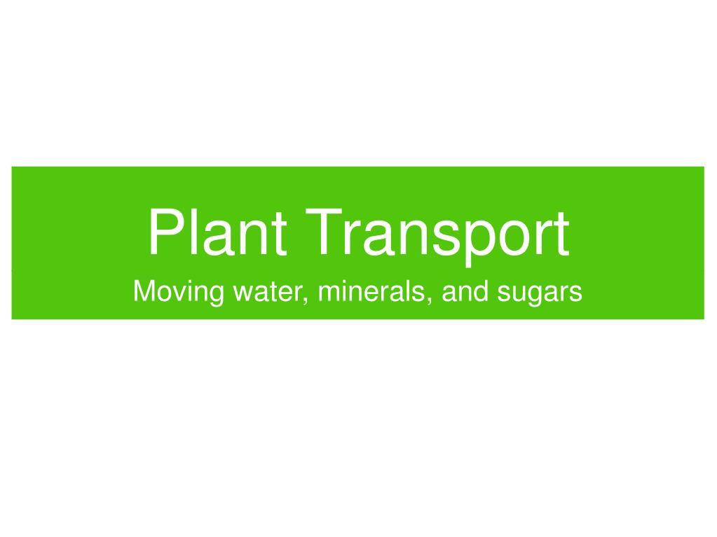 plant transport l.