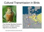 cultural transmission in birds