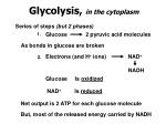 glycolysis in the cytoplasm