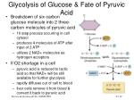 glycolysis of glucose fate of pyruvic acid