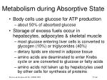 metabolism during absorptive state