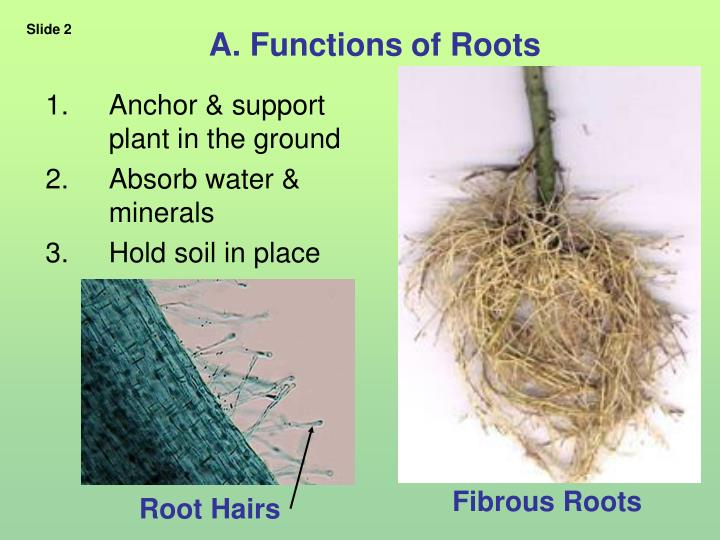 A functions of roots