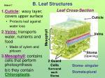 b leaf structures
