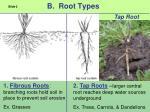 b root types